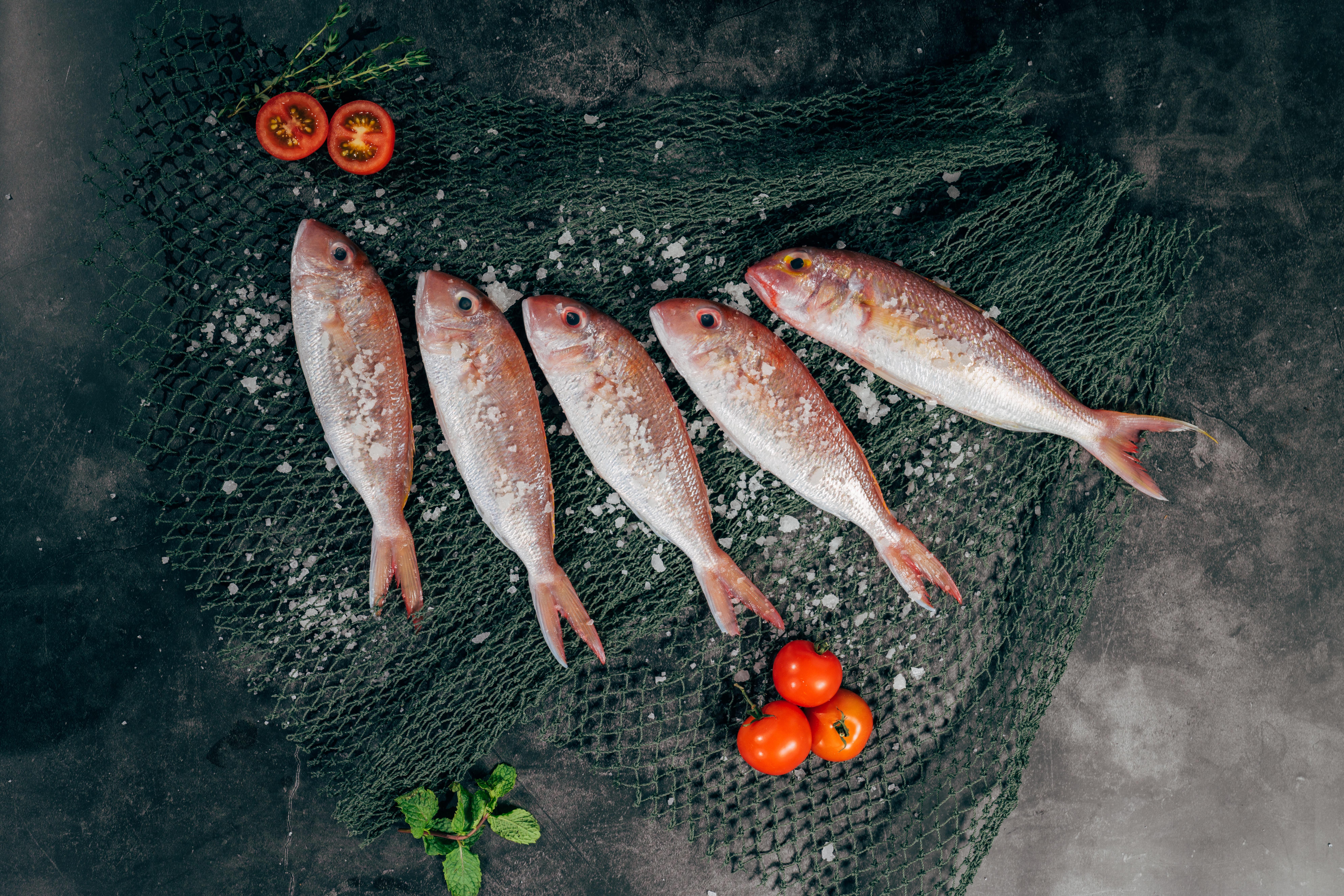 przechowywanie mięsa i ryb