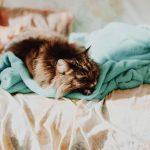 Jakie funkcje powinna mieć pralka dla alergika?